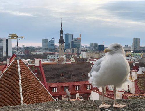 Idea di viaggio? ESTLALIA: le Repubbliche Baltiche